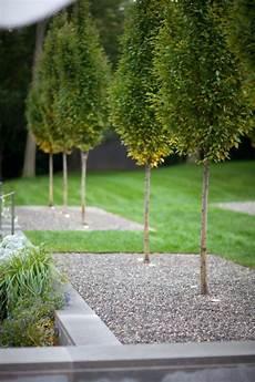 Gartengestaltung Kies Kiesbett Buchsbaum Anlegen
