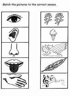 the 5 senses worksheets for kindergarten 12569 5 senses worksheet for 10 five senses worksheet worksheets for kindergarten