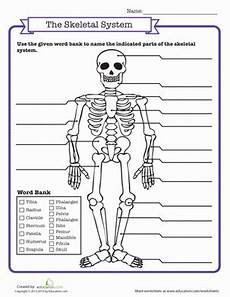skeletal system quiz worksheet education com