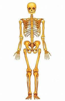 Rangka Tulang Sendi Dan Kelainan Pada Tulang Dan Sendi