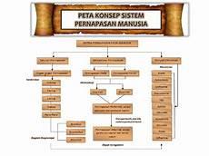 Anatomi Dan Fisiologi Sistem Pernapasan Manusia
