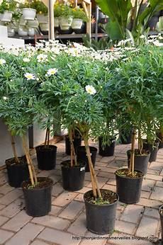 Mon Jardin Mes Merveilles Ouverture De Famiflora 2 5