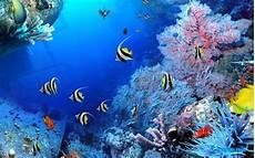 Apa Yang Dimaksud Dengan Laut Kenapa Air Laut Asin