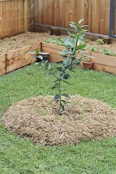 Obstbäume Pflanzen Wann - obstb 228 ume f 252 r den garten ideen pflegetipps f 252 r kleine