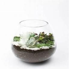 Sukkulenten Im Glas Im Blickfang Kreative Deko Ideen Mit