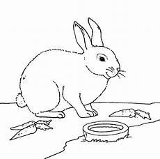 kostenlose malvorlage bauernhof kaninchen mit m 246 hren zum