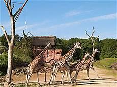 Zoom Gelsenkirchen öffnungszeiten - zoom erlebniswelt tierpark in gelsenkirchen parkscout de