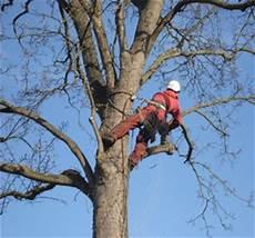 devis elagage arbre prix 233 lagage quel budget pr 233 voir pour vos arbres