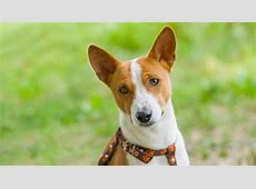 20 Dog Breeds for Allergy Sufferers