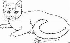 Katze Malvorlagen Gratis Schoene Katze Ausmalbild Malvorlage Tiere