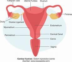 Gambar Struktur Organ Pada Sistem Reproduksi Perempuan