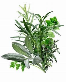 Herbes De Provence Olive Olive