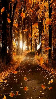 Free Animated Fall Backgrounds