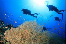 scuba diving in el nido philippines