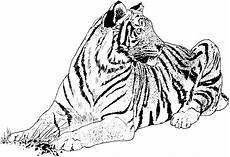big animals coloring pages 16904 tiger coloring pages big cat coloring pages with images cat coloring page coloring pages