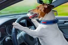 candele auto chion impatient honks car horn