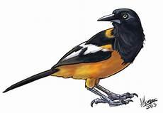 dibujo de un turpial ave nacional turpial para colorear imagui