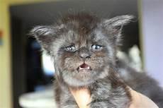 Gambar Mata Kucing Seram Koleksi Gambar Hd