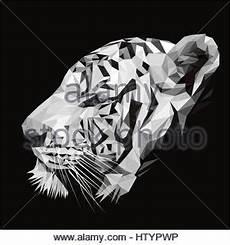 Malvorlagen Tiger Pool Schwarz Wei 223 Illustration Der Vorschule Oder