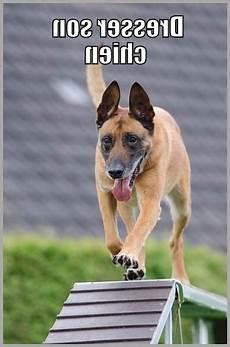 comment dresser un chien gratuit guide dresser chien de 6 mois gratuit