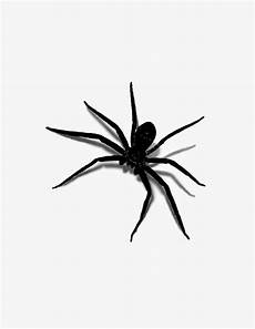 Introverted Free 3d Spiders