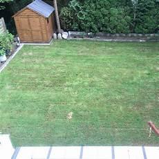 Rollrasen Sieht Schlecht Aus Warum Rasen Roll