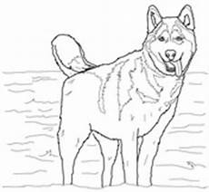 Ausmalbilder Hunde Husky Ausmalbild Husky Ausmalbilder Kostenlos Zum Ausdrucken