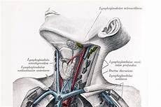geschwollene lymphknoten hals lymphknoten hals