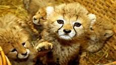 30 adorable animal wallpapers