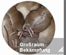 mäuse in der wand was tun rattenbek 228 mpfung notdienst toxtron in essen oberhausen