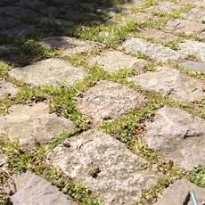 wie entfernt unkraut zwischen kopfsteinpflaster gras