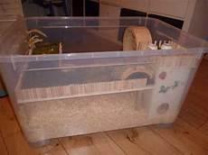 gabbie per gerbilli natura animali approfondimento gabbia per criceti nani