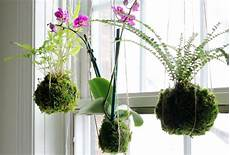 indooroutdoor hanging moss balls filled with plants kokedama how to create a moss string garden