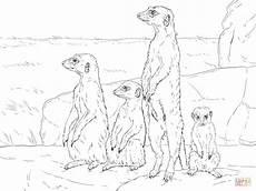 animals in the desert coloring pages 17026 meerkats standing up coloring vogel malvorlagen malvorlagen tiere erdm 228 nnchen