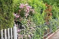 Büsche Pflanzen Sichtschutz - pin auf g 228 rten