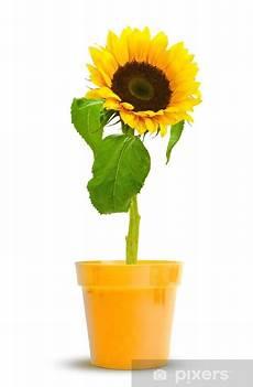 Sticker Une Fleur De Tournesol En Pot Couleur Tournesols