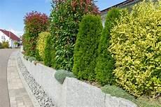 lebender sichtschutz im garten aus gr 252 nen pflanzen