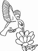 Hummingbird Coloring Pages Download And Print