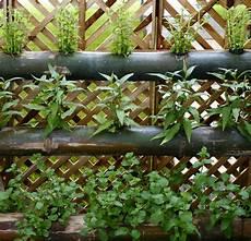 bambou de balcon vertical gardens wall gardens and living walls lush
