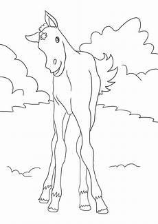 Ausmalbild Pferde Fohlen Fohlen Ausmalbilder Pferde Viele Malvorlagen Mit Pferden
