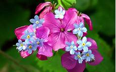 Flower Wallpaper Photo by Wallpapers Flowers Wallpapers