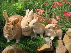 Kleine Haustiere Liste - wow haustiere ausgefallene tiere die ihnen gro 223 e freude