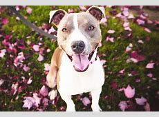 Dog Breeds List from A to Z, Pictures, Characteristics