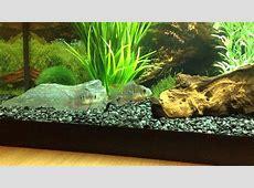 30 gallon fish tanks aquariums