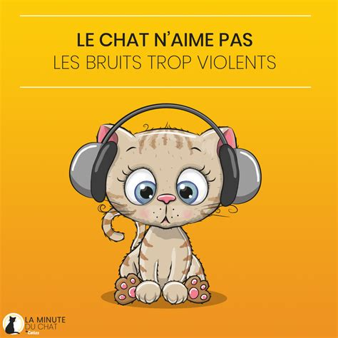Bruit Chat