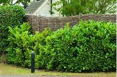 Sichtschutz Im Garten 22 Raffinierte Ideen Anregungen