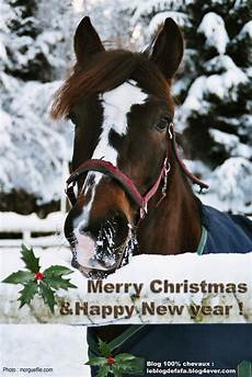 97 best images about christmas horses pinterest merry christmas and ponies