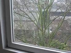 Vogel Fliegen Gegen Fenster Was Tun Vogelschlag An Glas