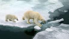 vendre la peau de l ours faut il vendre la peau de l ours polaire pour la science