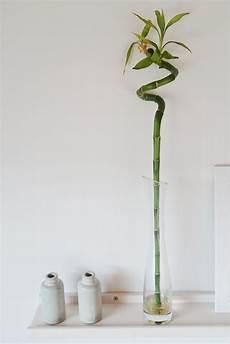 zimmerpflanzen die auch bei dir 252 berleben